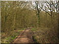 TQ9637 : Byway into Post Wood by David Anstiss