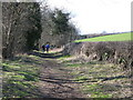NY9864 : Riverbank footpath below Corstopitum by Mike Quinn