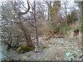 NY4522 : Ullswater shoreline by Andrew Abbott