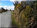 C1619 : Road at Gortnaravern by Kenneth  Allen