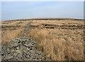 SS8692 : Moorland and stone wall remains on Mynydd Pwll-yr-Iwrch by eswales
