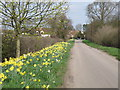 TL0362 : Springtime on the Butts by Michael Trolove