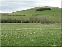 NT4437 : Plantation on Mains Hill by M J Richardson