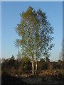 SU9666 : Chobham Common by Alan Hunt