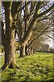 TA0249 : Watton Abbey trees by Paul Harrop