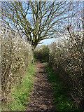 SU9567 : Footpath, Sunningdale by Alan Hunt
