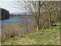 NY9963 : The north bank of the River Tyne below Corbridge (2) by Mike Quinn
