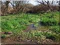 SN0026 : Watercourse near Ambleston by ceridwen