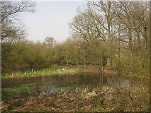 TQ7033 : Pond near Combwell Priory Farm by David Anstiss