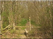 TQ7033 : Footpath enters Shearnfold Wood by David Anstiss