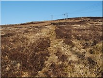 NS3679 : Path across the moor by Lairich Rig