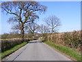 TM3664 : Kelsale Road, Kelsale Cum Carlton by Adrian Cable