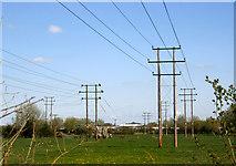 SP5720 : Field of Poles by Des Blenkinsopp