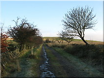 NY5675 : Track east of Crossgreens by Mike Quinn