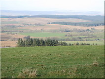 NY5675 : Pasture southeast of Park Head by Mike Quinn