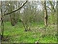 TL0360 : Galsey Wood Nature Reserve by M J Richardson