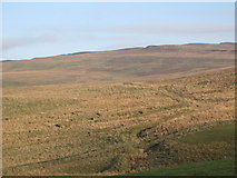 NY5676 : Moorland west of Grey Hill by Mike Quinn