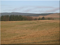 NY5676 : Moorland west of Grey Hill (2) by Mike Quinn