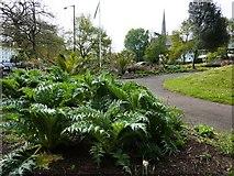SX9164 : Cardoons or artichokes, Upton Park by Tom Jolliffe