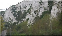 TQ4210 : Cliff above the A26 by N Chadwick