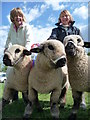 ST0512 : Uffculme : Uffculme Show 2010 & Prize Winning Sheep by Lewis Clarke