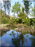 SU6462 : Pond, Silchester by Colin Smith