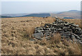 SS8692 : On Mynydd Pwll-yr-Iwrch (Mynydd Bach) by eswales