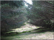 NY6176 : Firebreak in the plantation on Black Rigg (4) by Mike Quinn