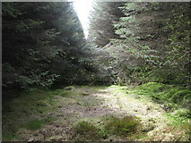 NY6176 : Blocked firebreak in the plantation on Black Rigg (2) by Mike Quinn