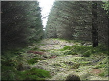 NY6176 : Firebreak in the plantation on Black Rigg (5) by Mike Quinn