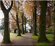 SX9164 : Avenue of beech trees, Upton Park, Torquay by Tom Jolliffe