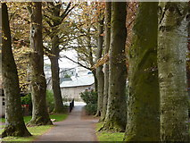 SX9164 : Beech tree avenue, Upton Park, Torquay by Tom Jolliffe