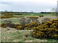NU0019 : Gorse above Roddam Burn, west of Calder by Andrew Curtis
