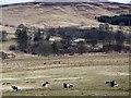 NN8339 : Jacob sheep near Garrow by Maigheach-gheal