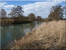 ST6768 : River Avon by Derek Harper