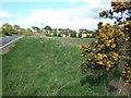 TF6723 : Roadside gorse bush by Richard Humphrey