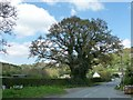 SJ2523 : Tree at the foot of Blodwel Bank by Christine Johnstone
