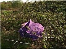 SX9066 : The purple umbrella by Derek Harper