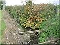 O0147 : Drainage Ditch, Co Meath by C O'Flanagan