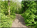 SJ6803 : Footpath and bridleway in Lloyds' Coppice by Richard Law