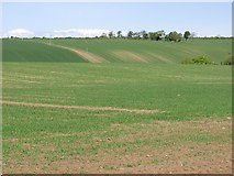 NT5675 : Spring barley, Nether Hailes by Richard Webb