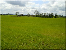 O0956 : Landscape, Co Dublin by C O'Flanagan