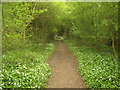 TQ4645 : Bridleway to How Green (2) by David Anstiss