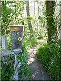 TR1859 : Footpath through woodland near Fordwich by pam fray