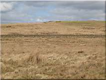 NY5775 : Panorama from the cairn north of Borderrigg (20: NNE - Grey Hill) by Mike Quinn