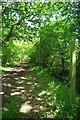 TQ6996 : Bridleway to Broomwood Lane by Glyn Baker