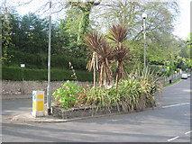 SX9364 : Flower beds on traffic Island in Wellswood centre by John Firth