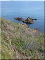 SW8024 : Rocks below Nare Head by Rod Allday