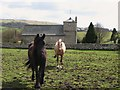 NY5674 : St. Cuthbert's Church, Bewcastle (and horses) by Mike Quinn