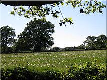 SP2375 : Dandelion clocks in a meadow by Robin Stott